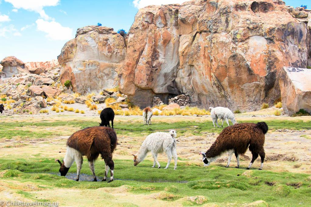 Valle de las Rocas поездка в Боливию отчет в блоге Chiletravelmag.ru -22