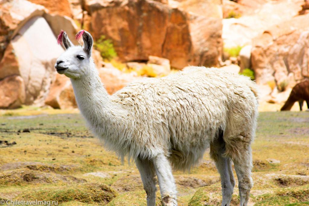 Valle de las Rocas поездка в Боливию отчет в блоге Chiletravelmag.ru -23