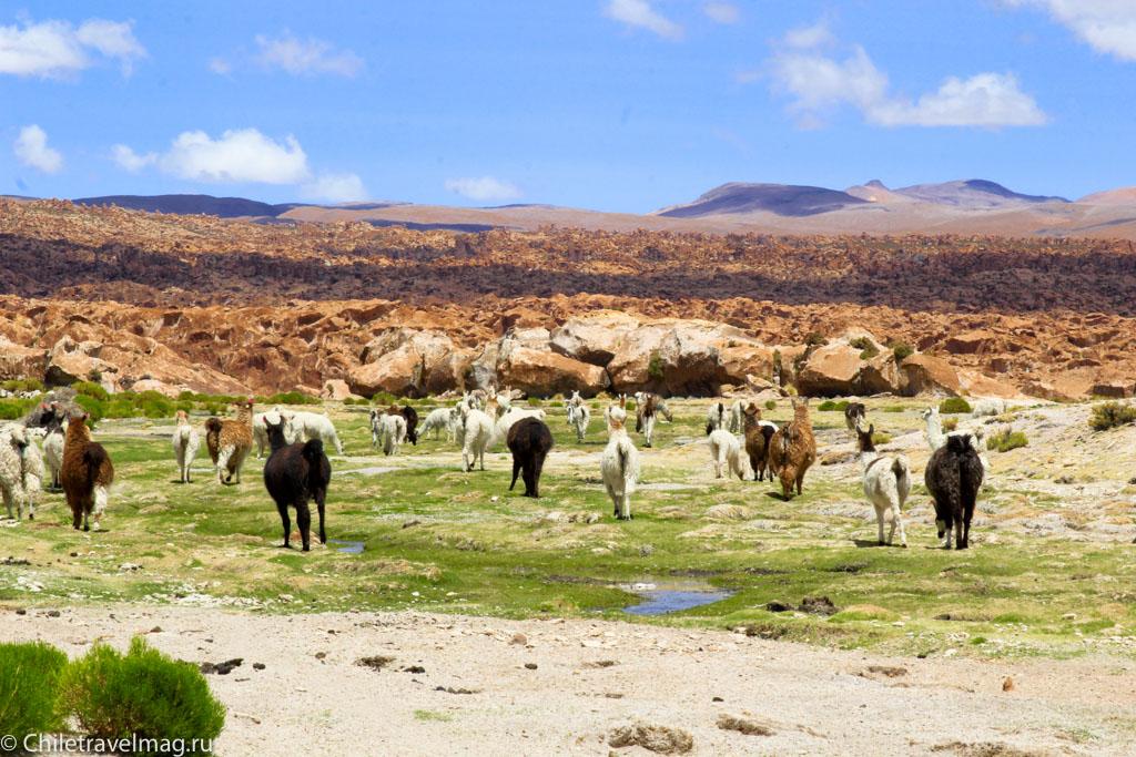 Valle de las Rocas поездка в Боливию отчет в блоге Chiletravelmag.ru -3