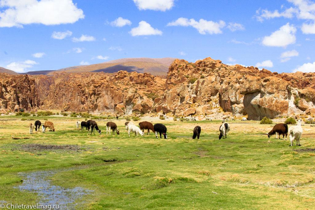 Valle de las Rocas поездка в Боливию отчет в блоге Chiletravelmag.ru -5