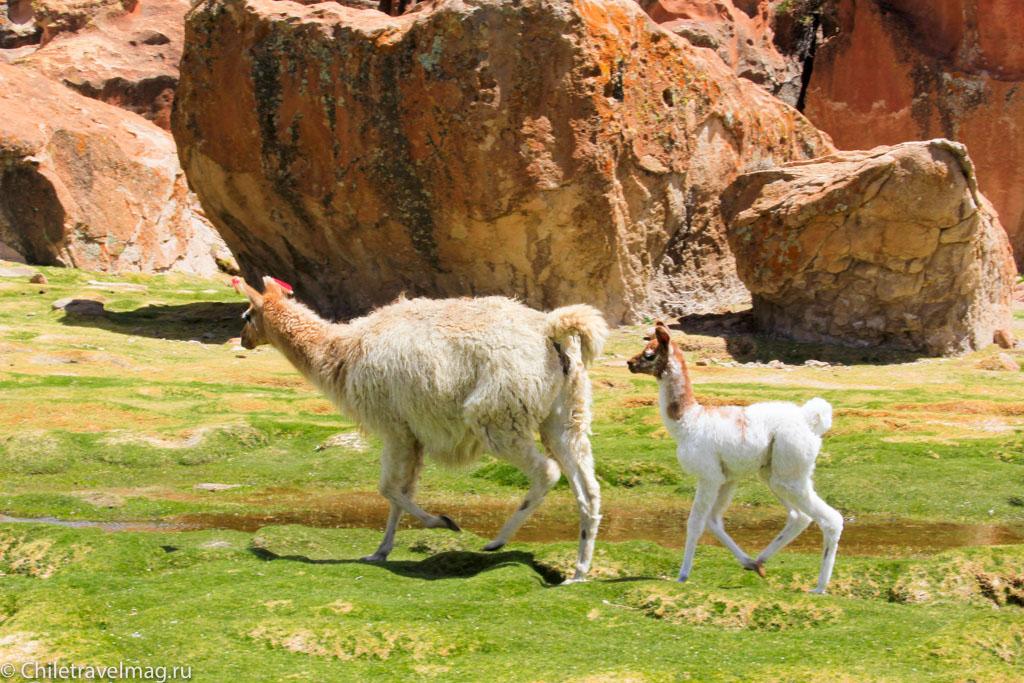 Valle de las Rocas поездка в Боливию отчет в блоге Chiletravelmag.ru -8