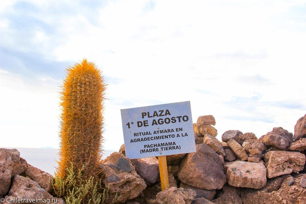 Остров с кактусами на Уюни отзыв - isla Incahuasi bolivia-11