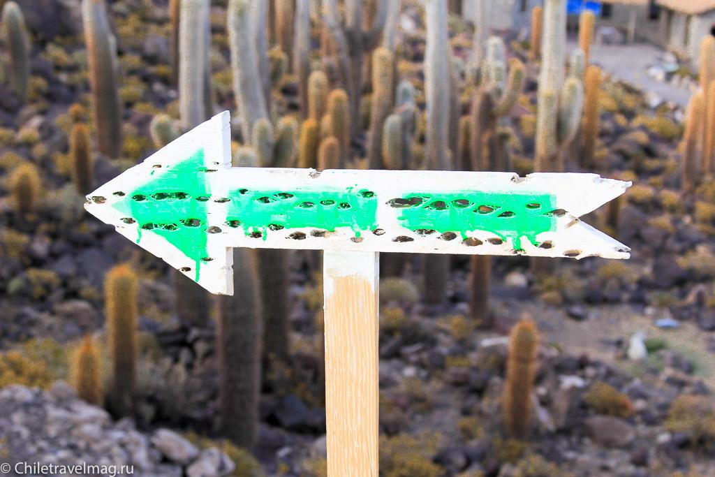 Остров с кактусами на Уюни отзыв - isla Incahuasi bolivia-6
