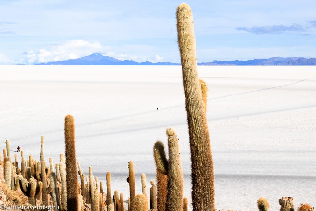 Остров с кактусами на Уюни отзыв - isla Incahuasi bolivia-8