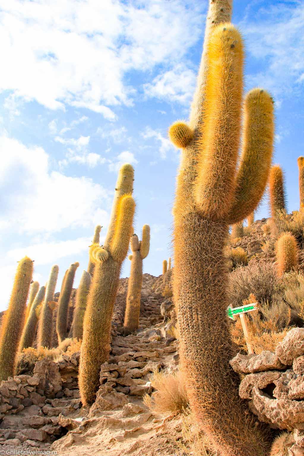 Остров с кактусами на Уюни отзыв - isla Incahuasi bolivia-9
