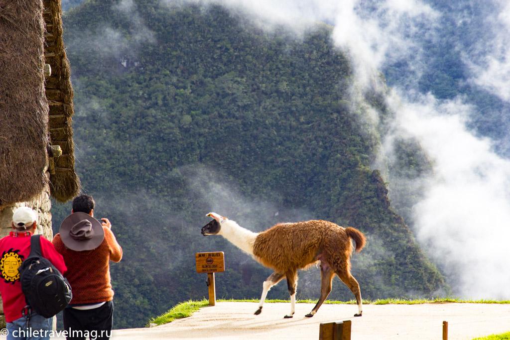 Мачу-Пикчу фото как добраться пост в блоге-мой опыт17