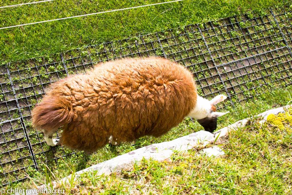 Мачу-Пикчу фото как добраться пост в блоге-мой опыт18