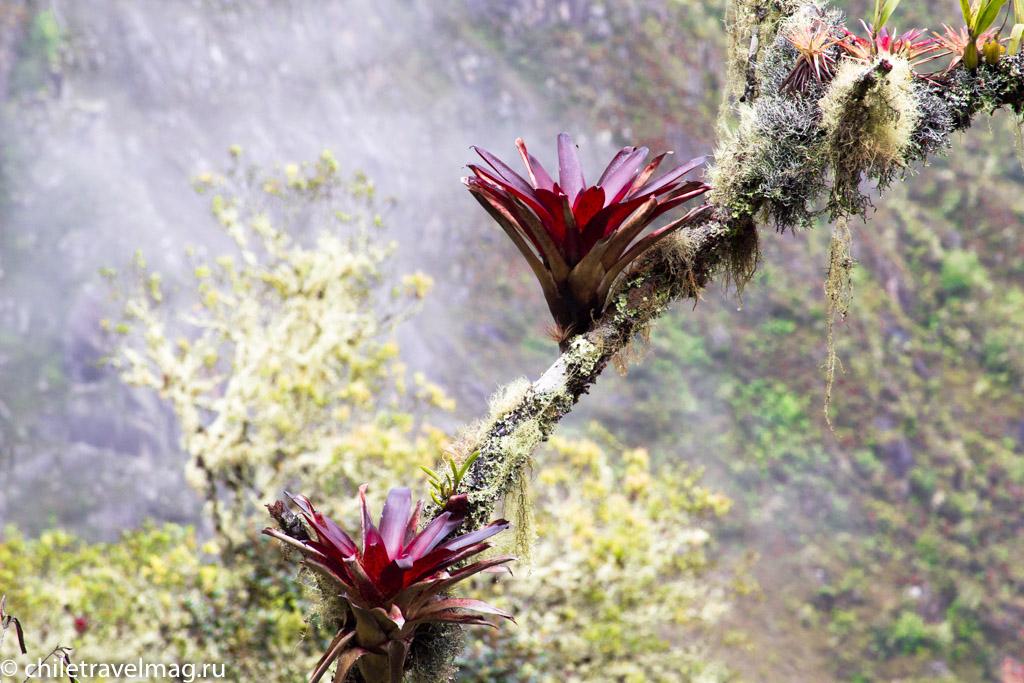 Мачу-Пикчу фото как добраться пост в блоге-мой опыт30