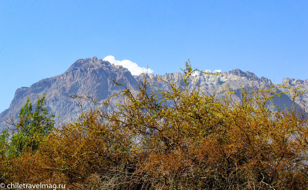 Национальный заповедник Рио-Лос-Сипресеc в Чили обзор в блоге Chiletravelmag15