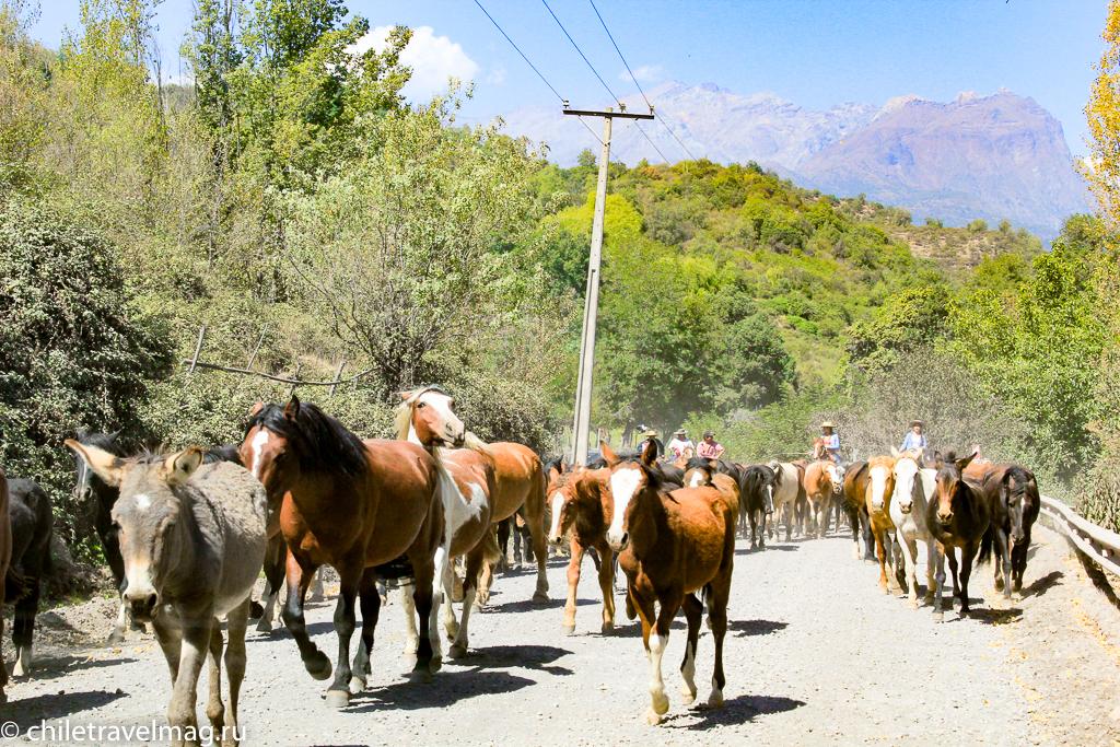 Национальный заповедник Рио-Лос-Сипресеc в Чили обзор в блоге Chiletravelmag18