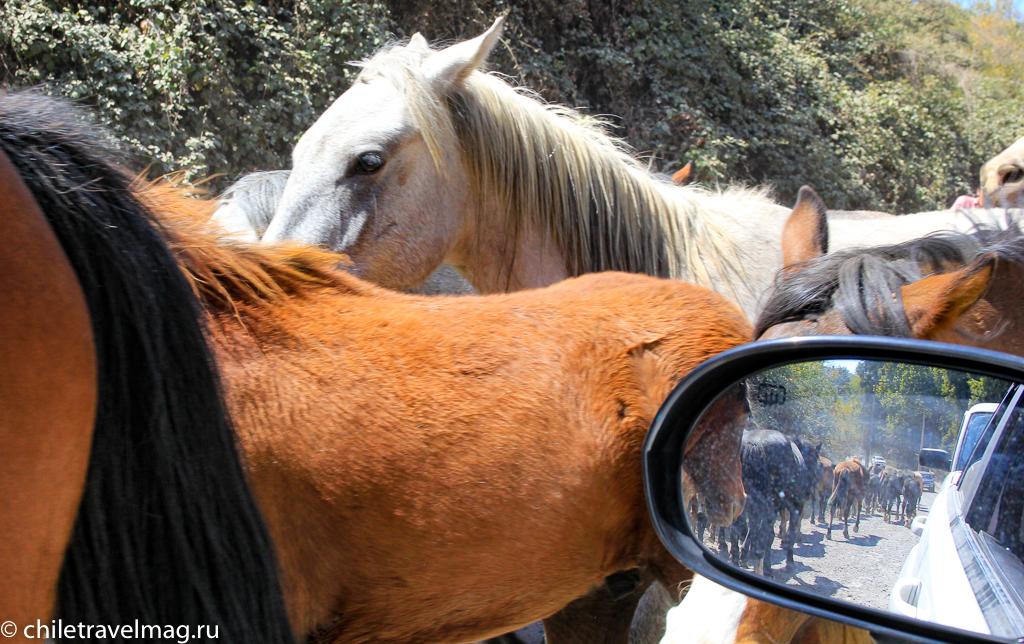 Национальный заповедник Рио-Лос-Сипресеc в Чили обзор в блоге Chiletravelmag19