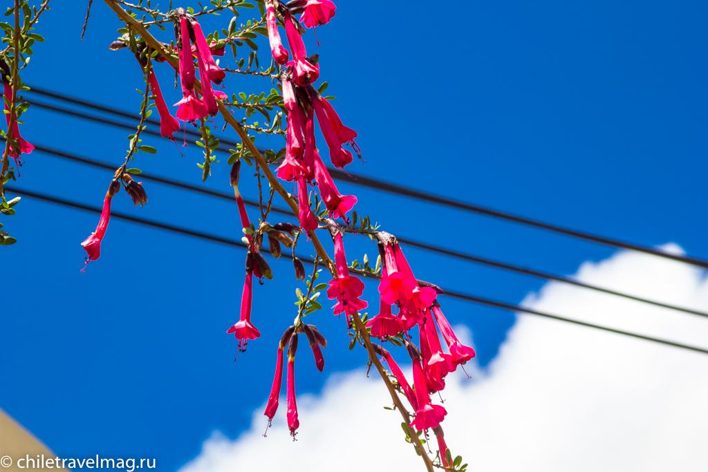 Куско в Перу фото, рассказ в блоге Chiletravelmag39