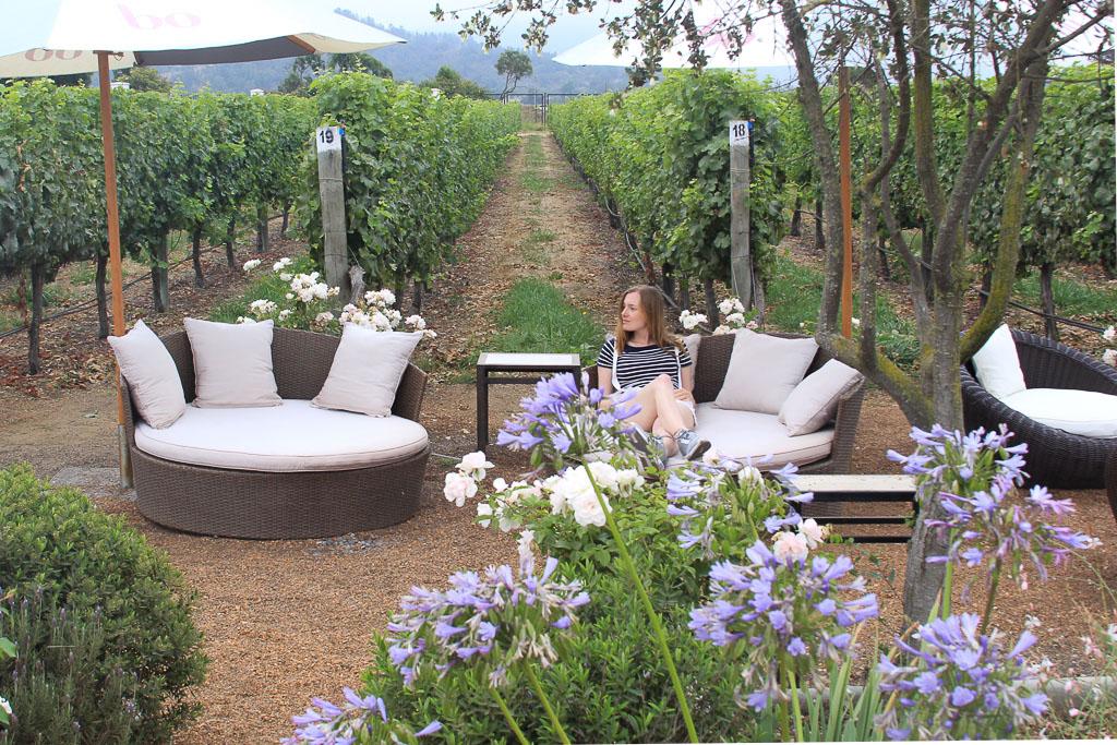 Винодельня Чили Viña Casas del Bosque долина Касабланка, отзыв о поездке-7