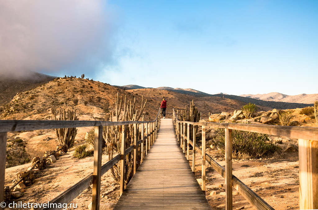 Парк Пан-де-Асукар, поездка в Чили23