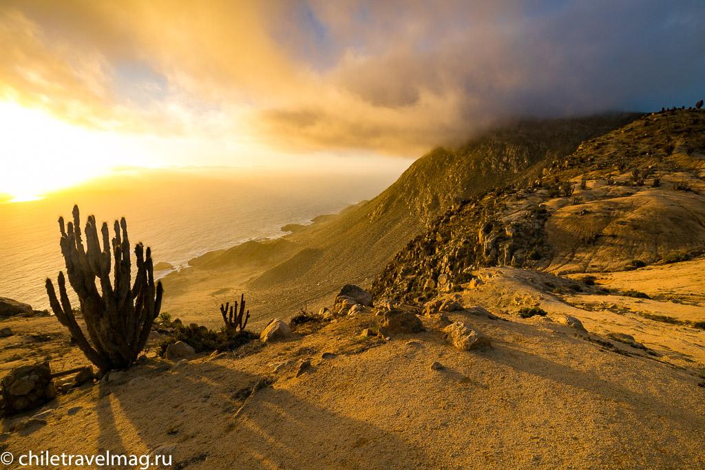 Парк Пан-де-Асукар, поездка в Чили24