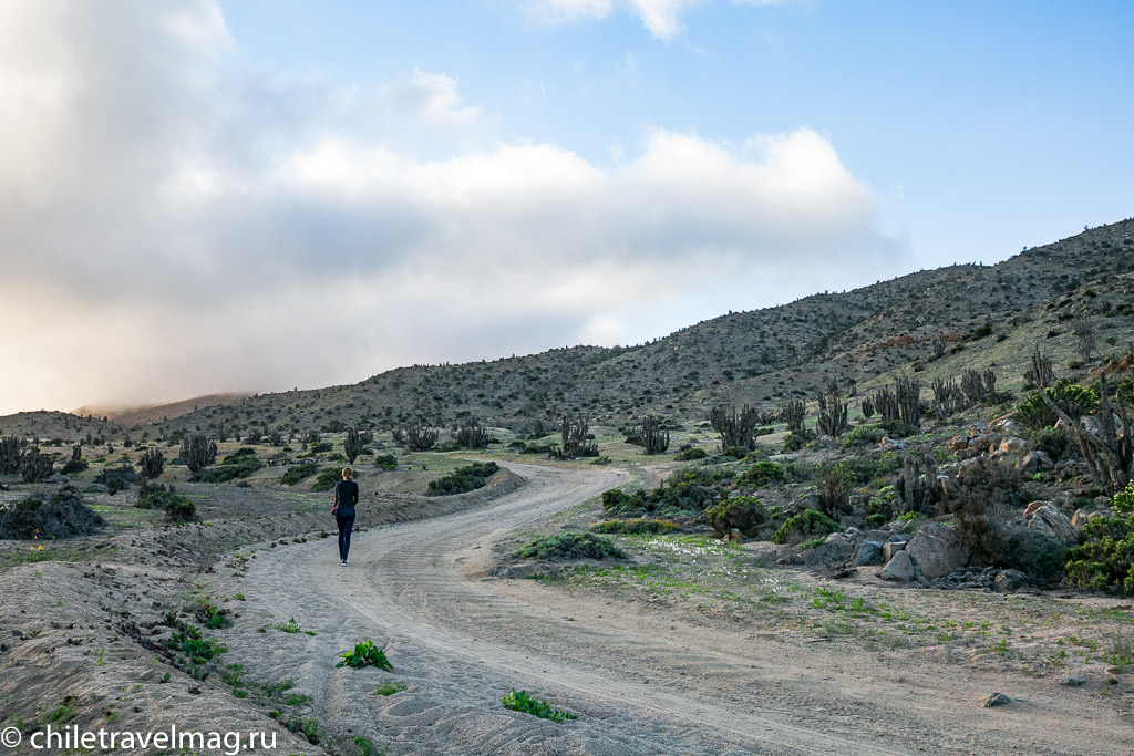Парк Пан-де-Асукар, поездка в Чили9