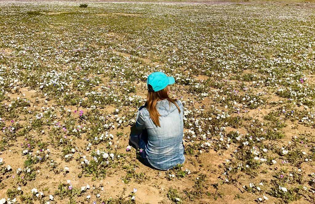 Цветущая пустыня Атакама тур поездка Чили11
