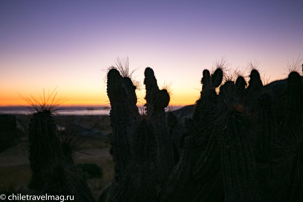 Цветущая пустыня Чили13