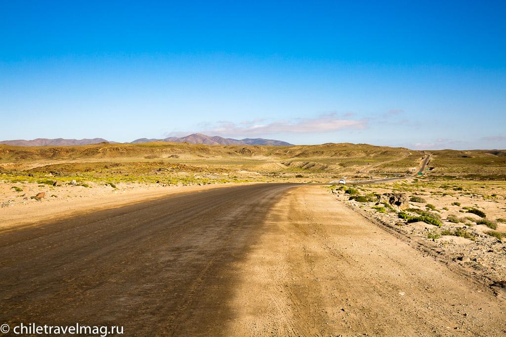 Цветущая пустыня Чили2