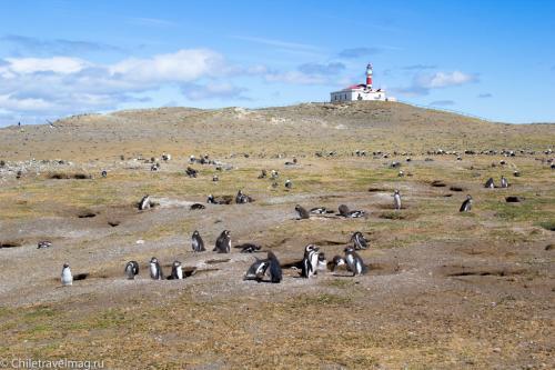 тур в Патагонию Чили пингвины