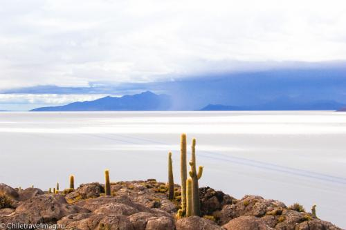 Остров с кактусами на Уюни отзыв - isla Incahuasi bolivia-13