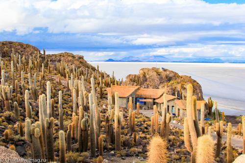 Остров с кактусами на Уюни отзыв - isla Incahuasi bolivia-5