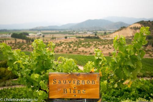 винодельня Inomita долина Касабланка Чили7