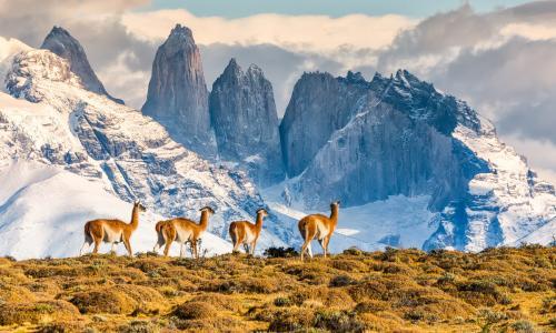 тур в Патагонию Чили