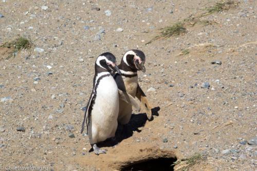 Пингвины на острове Магдалена