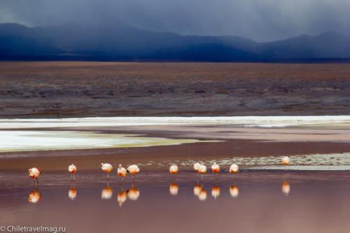 Поездка в Боливию Лагуна Колорада отзыв в блоге-18