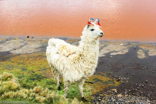 Поездка в Боливию Лагуна Колорада отзыв в блоге-7