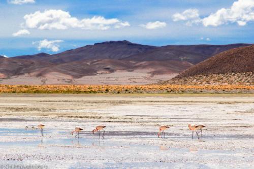 Поездка в Боливию, Тур в Боливию, отзыв в блоге, долина Лас Рокас в Боливии-17