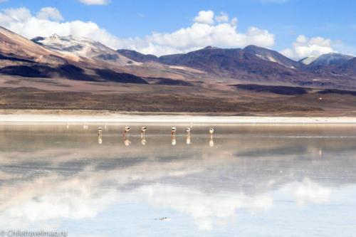 Тур в Боливию-лагуны-альтиплано-Боливия-отчет-в-блоге-Chiletravelmag-18