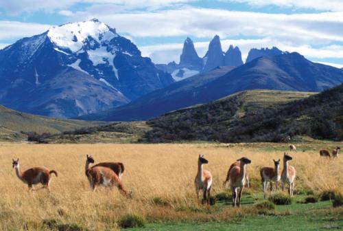 14_001p_GuanacosTorres_NS-hotel-tierra-patagonia