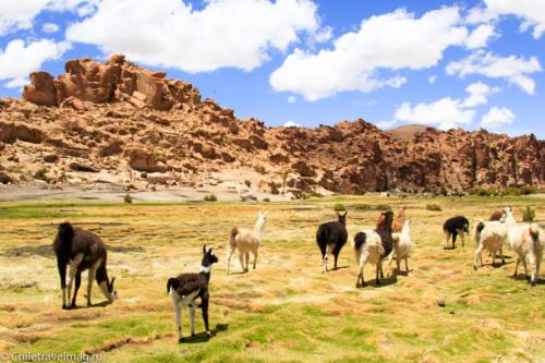 Valle de las Rocas поездка в Боливию отчет в блоге Chiletravelmag.ru -24